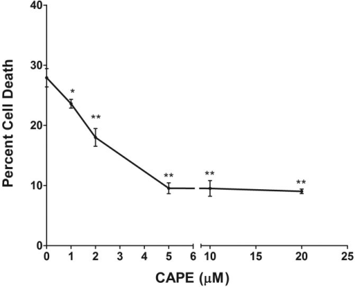 Caffeic acid phenethyl ester (CAPE) protects 661W cells from oxidant-induced cell death. 661W cells were pretreated in situ with 1 to 20 μM CAPE for 3 h. After thorough washing, cells were exposed to 1 mM H2O2 for 6 h. Cell death was then measured by analyzing the release of lactate dehydrogenase (LDH; n=4 plate × 4 replication assay). (*: p<0.01; **: p<0.001; by one way ANOVA)