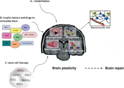 Brain repair therapies through brain plasticity enhancement. Mechanisms underlying cerebral plasticity associated with repair processes. G-CSF: granulocyte colony-stimulating factor; VEGF: vascular endothelial growth factor; BDNF: brain-derived neurotrophic factor; NGF: nerve growth factor; bFGF: basic fibroblast growth factor; IGF-1: insulin growth factor-1; EPO: erythropoietin; MSC: mesenchymal stem cells; UCBC: umbilical cord blood cells; DSC: dental stem cells; ESC: embryonic stem cells; BMSC: bone marrow stem cells; NSC: neural stem cells.