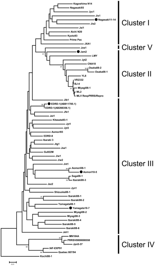 Phylogenetic relationships among Japanese isolates of NA-type PRRSVs. Thephylogenetic analysis was performed according to the neighbor-joining method by usingthe nucleotide sequences of ORF5 [11]determined according to ClustalW [2]. Scale forlengths of branches is shown at the bottom. Bootstrap trials were conducted 1,000times, and values exceeding 80% are shown at nodes. Closed circles indicate thestrains sequenced by the CORT-MDA method in this study.