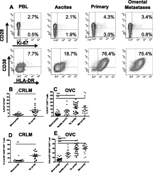 CD8+T cells phenotype in CRC and OVC patients. A. An ex | Open-i