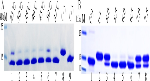 Analyzing the characteristics of Endo H-P through mobility shift assay of RNase B.(A).Identifying the optimum temperature of Endo H-P with SDS-PAGE. M protein molecular weight markers (the size of each band was indicated on the left);Lane 1 to Lane 6 denatured RNase B treated with concentrated Endo H-P at 25°C, 30°C, 35°C, 40°C, 45°C and 50°C, respectively; Lane 7 denatured RNase B treated with concentrated Endo H-P at 37°C, respectively;Lane 8 the negative control (RNase B without treatment); Lane 9 the positive control (overdose of Endo H-P was added to the reaction system);(B). Identifying the optimum temperature of Endo H-P with SDS-PAGE. M protein molecular weight markers (the size of each band was indicated on the left);Lane 1 the positive control (overdose of Endo H-P was added to the reaction system); Lane 2 the negative control (RNase B without treatment);Lane 3–8 denatured RNase B treated with Endo H-P at pH5.0, 5.5, 6.0, 6.5, 7.0 and 7.5, respectively.