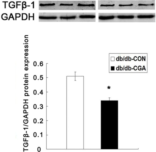 CGA Lowered the Protein Expression of TGFβ-1 in db/db Mice.*P <0.05 compared with the db/db-CON group (n = 8).