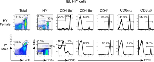 Fate mapping of IEL T cells with the transgenic HY-TCR using RORγt-cre.CD4 and CD8α expression by gated HY (T3.70)+ IEL (left column) is shown in the second column. CD8β expression by gated CD8α+ cells (second column) is shown in the third column. EYFP expression by HY+CD4−CD8α−, HY+CD4+, HY+CD8αα+ and HY+CD8αβ+ T cells is shown.