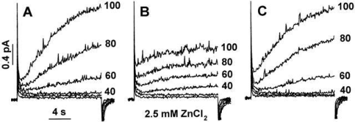 Effects of intracellular ZnCl2 on H+ currents in an inside-out patch studied at pH 6.5//6.5. The first family (A) was recorded within 5 min after forming the inside-out patch. The family in B was recorded starting 2.5 min after addition of 2.5 mM ZnCl2, and the family in C was recorded starting 1.5 min after washout. In all parts, the cell was held at −40 mV, and 16-s pulses were applied in 20-mV increments. Calibration bars in A apply to all families.
