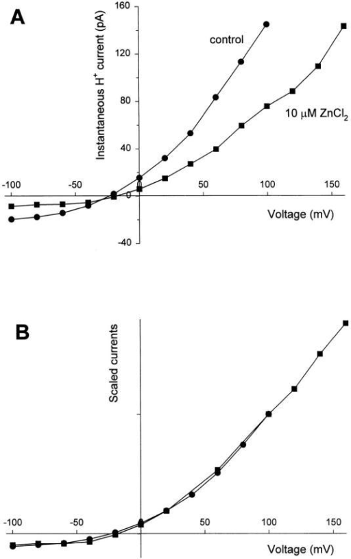(A) Instantaneous current–voltage relationships in a cell studied at pH 7.0//6.5 before (•) and after (▪) addition of 10 μM ZnCl2 to the bath. A prepulse to +40 mV for control and +100 mV in the presence of ZnCl2 was applied to open H+ channels, followed by a test pulse to the voltage on the abscissae. The current at the start of the test pulse, after the capacitive transient, is plotted. (B) Data from A after correction for the current at the end of the prepulse, and normalized to be equal at +100 mV. Dividing the test current by that at the end of the prepulse corrects for variation in the activation of the gH during different prepulses. The symbols have the same meaning as in A.