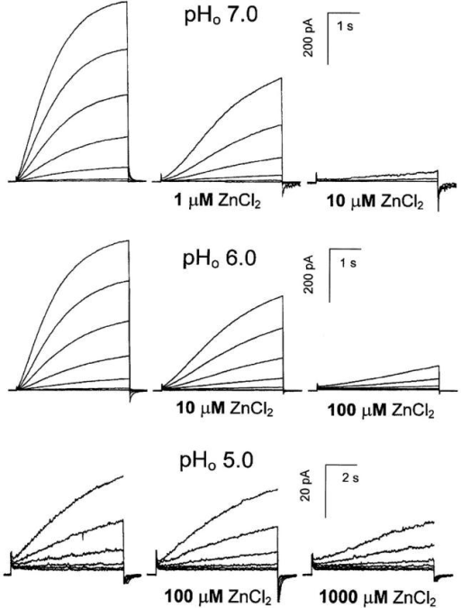 The effects of ZnCl2 are strongly dependent on pHo. Families of voltage-clamp currents are shown at pHo 7.0, 6.0, and 5.0, with pHi 5.5, recorded in the absence (left-most family in each row) and presence of the indicated concentration of ZnCl2. Data in each row are from the same cell, were recorded during an identical family of voltage pulses, and the same calibration bars apply. The cell at pHo 7.0 was held at −60 mV, and pulses were applied from −40 to +20 mV in 10-mV increments. The cell at pHo 6.0 was held at −20 mV and pulses applied from +10 to +70 mV in 10-mV increments. The cell at pHo 5.0 was held at −20 mV and pulses applied from +50 to +100 mV in 10-mV increments.