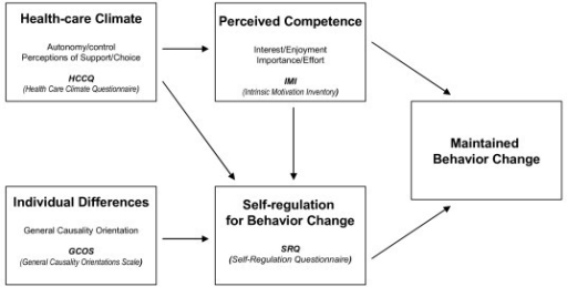 Self determination theory and wellbeing