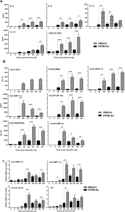 DBA/2J mice exhibit a stronger inflammatory response than C57BL/6J mice.DBA/2J (checked bars) and C57BL/6J mice (black bars) were infected intra-nasally with 2×103 FFU of PR8 virus. Bronchio-alveolar lavage (BAL) was collected from non-infected controls (c) or at the indicated days (d1, d2, d3, d4) post infection, and the concentration of cytokines (A) or chemokines (B) was determined. Expression of cytokines and chemokines was determined by real-time PCR (C). Each time point represents the mean value ±SEM of 7 mice per group for (A) and (B), and of 10 mice per group for (C). DBA/2J and C57BL/6J mice were compared for statistically significant differences using non-parametric Mann-Whitney-U-test. *: p value<0.05; **: p<0.01; ***: p value<0.001.