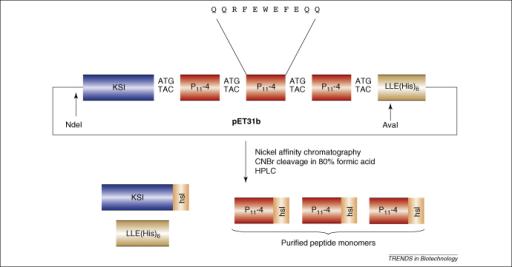 ketosteroid isomerase protein