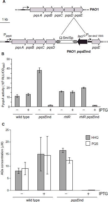 A. Schematic representation of the pqs locus in P. aeruginosa PAO1 wild type and the IPTG-inducible pqsE strain, pqsEind. The Ω interposon (SmR/SpcR) is from plasmid pHP45Ω: the lacIQ repressor is derived, together with the Ptac promoter, from plasmid pME6032. B. Activity of the PpqsA::lux promoter fusion. The activity of the PpqsA promoter was monitored during growth in PAO1 wild type, pqsEind, rhlR and pqsEind rhlR double mutants. The maximal expression levels reached during the late exponential phase of growth are shown. Where indicated (+), 1 mM IPTG was added to the growth medium. Error bars are calculated from three independent experiments. C. Concentration of HHQ (grey bars) and PQS (white bars) determined by LC-mass spectrometry in PAO1 wild type and the pqsEind mutant. The AQs were extracted from overnight cultures grown in LB broth; where indicated (+), 1 mM IPTG was added to the growth medium. The average of the results from three independent experiments is shown and error bars represent two standard deviations from the mean.