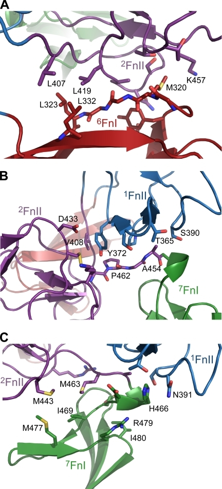 Prominent domain-domain contacts involving 6FnI-2FnII (A), 1FnII-2FnII (B), and 1–2FnII-7FnI (C). Individual domains are colored as in Fig. 1, and specific residues are shown as sticks colored similar to their respective domains. Compared with the solution structure of 6FnI1–2FnII (12) a new 1FnII-2FnII interface (B) is formed, and the 2FnII-7FnI linker is stabilized. 7FnI interacts with both 1FnII and 2FnII and is further anchored to this linker.
