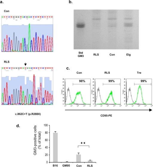 Characterization of the GM3 synthase-deficient lymphoid cell line.(a) Sequencing of the ST3GAL5 cDNA prepared from control (Con) and the RLS (GM3 synthase-deficient) cell lines. The arrow indicates the c.862C>T point mutation. (b) HPTLC analysis of gangliosides isolated from control (Con), the RLS and Elg (NPD type A) cell lines. GM3 was used as a standard lipid. (c) Cell surface expression of Fas/CD95. Intact control (Con), RLS and Tre (NPD type A) cell lines were incubated with an anti-CD95 (green line) or an irrelevant (black line) antibody. Labelling was evaluated by flow cytometry. (d) Cell surface expression of GM3 in control (Con) and RLS lymphoblasts, as evaluated by flow cytometry. Control murine melanoma (B16 cell line) and glucosylceramide synthase-deficient murine melanoma (GM95) cells were used as controls.