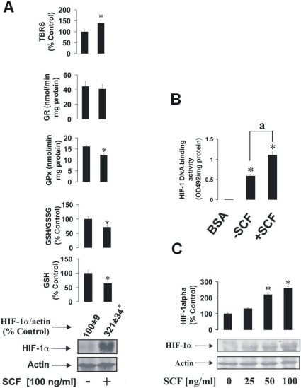 The impact of SCF on HIF-1α accumulation and the GSH-dependent antioxidative system in human myeloid leukaemia cells.(A) THP-1 human myeloid leukaemia cells were stimulated for 24 h with 100 ng/ml SCF. HIF-1α accumulation, GSH and GSSG levels, GPx/GR activities and the quantity of the TBRS were then measured as outlined in Materials and methods. (B) THP-1 human myeloid leukaemia cells were cultured in the presence or absence of 100 ng/ml SCF for 24 h. HIF-1 DNA-binding activity was analysed using 10 mg/ml BSA as a negative control. (C) THP-1 cells were exposed for 4 h to 25, 50 and 100 ng/ml SCF. HIF-1α accumulation was then measured as described in Materials and methods. Quantitative data are mean values ± S.D. of at least three individual experiments. *P<0.01 vs control. Western blot data are shown from one representative experiment out of three that gave similar results.