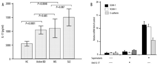 Up-regulation of adhesion molecule mRNA expression in human umbilical vein endothelial cells (HUVECs) by interleukin-17A (IL-17A) derived from patients with active Behçet's disease (BD). (A): PBMCs from patients with active BD (n=20), MS (n=12), SLE (n=20) and control subjects (n=12) were stimulated for 5 hours with phorbol myristate acetate and ionomycin, and supernatants were collected to detect IL-17A by enzyme-linked immunosorbent assay. (B): Quantitative reverse transcription-polymerase chain reaction was performed to determine the expression of adhesion molecule mRNA in HUVECs induced by supernatants from active BD patients from the culture of peripheral blood mononuclear cells (PBMCs) derived from patients with active BD (n=10).