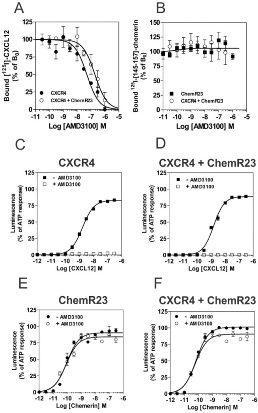 Effect of AMD3100 on binding and functional properties of cells expressing CXCR4 and ChemR23.[A, B] Competition binding assays were performed on cells expressing CXCR4 (•) and ChemR23 (▪) only, or cells co-expressing CXCR4 and ChemR23 (○). Cells were incubated with 0.1 nM 125I-CXCL12 (A) or 125I-[145–157]-chemerin (B), as tracers and increasing concentrations of unlabelled AMD3100 as competitor. After one hour incubation, unbound tracers were separated by filtration and filters washed twice before counting. The data were normalized for nonspecific binding (0%) in the presence of 300 nM of unlabelled CXCL12 or chemerin respectively, and specific binding in the absence of competitor (100%). All points were run in duplicate (error bars indicate S.E.M.). The displayed data are representative of two independent experiments. The functional responses of CHO-K1 cells expressing CXCR4 (C), ChemR23 (E) or both receptors (D, F) were measured by using the aequorin-based calcium mobilization assay. [C, D] Cells preloaded with coelenterazine were stimulated with increasing concentrations of CXCL12 (▪) or CXCL12 + AMD3100 (□). [E, F] Cells preloaded with coelenterazine were stimulated with increasing concentration of chemerin (•) or chemerin + AMD3100 (○). The results were normalized for baseline activity (0%) and the maximal response obtained with 25 µM ATP (100%). All points were run in triplicates (error bars indicate S.E.M.). The displayed data are representative of three independent experiments.