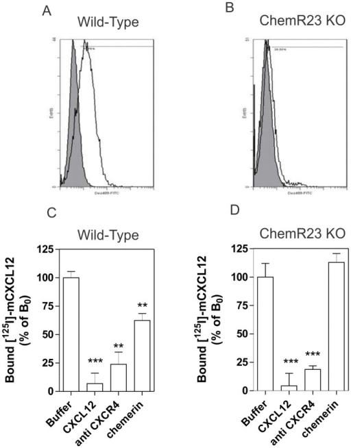 Competition binding assays on BMDCs.[A, B] FACS analysis showing the cell surface expression of mChemR23/Dez on BMDCs generated from wild-type or ChemR23−/− mice. Cells were incubated with an anti-mChemR23 antibody (open histogram) or a control isotype (filled histogram). [C, D] Competition binding assays were performed on BMDCs generated from wild-type (C) or ChemR23−/− mice (D). Purified cells were incubated with 0.2 nM 125I-CXCL12 as tracer, and CXCL12 (300 nM), chemerin (300 nM) or a monoclonal anti-CXCR4 antibody (10 µg/ml) as competitors. After one hour incubation, unbound tracer was separated by filtration and filters washed twice before counting. The data were normalized for non-specific binding (0%) and specific binding in the absence of competitor (100%). Statistical significance as compared to the 100% values was tested by two-way analysis of variance followed by Tukey's test (***, P<0.001; **, P<0.01). All data points were performed in triplicate and the displayed data are the mean of five experiments performed with three independent cell preparations (error bars indicate S.E.M.).