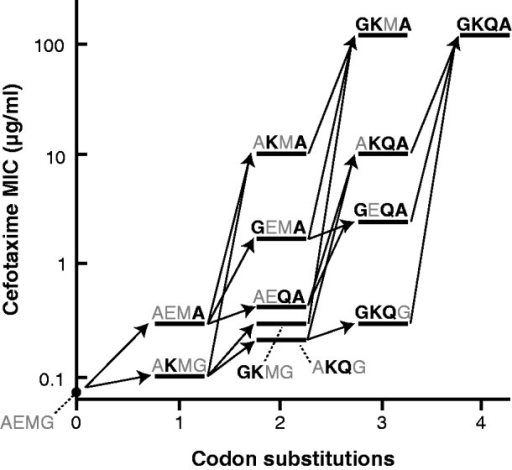 Feasible trajectories for evolving GKQA (colony 14) from TEM-1 (i.e. AEMG) by accumulation of codon substitutions one at a time. Mutations are shown in black, bold letters. Of the 24 possible trajectories, five end with GKQA and four end with GKMA, an allele with equivalent fitness to GKQA. Cefotaxime resistance was measured by plate assay as in Table 1, and the value reported represents the median of three replicates. Data for all replicates are provided in Supplementary Table S3.