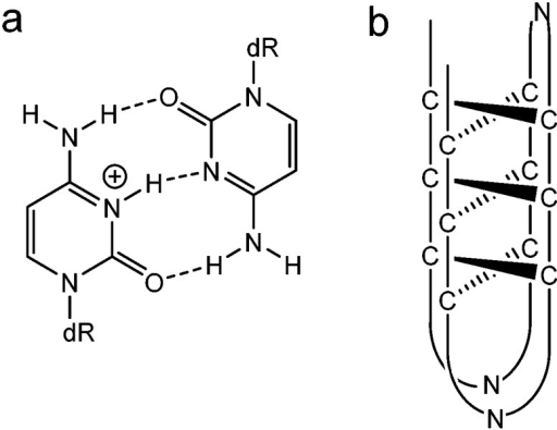 (a) Protonated-cytosine: cytosine base pair. (b) Schematic representation of an i-motif structure, where N denotes any DNA heterocyclic base.