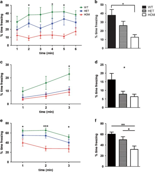 Rapgef6 deletion impairs contextual and cued fear conditioning, implying amygdala dysfunction. (a) Contextual fear conditioning had a significant effect of genotype (P=0.016) but not test time (P=0.09) with HOM mice freezing less in the original context at the second, fourth and fifth minutes (P<0.05). (b) Averaged contextual fear also had a significant effect of genotype (P=0.016), with HOM mice freezing significantly less than WT (P<0.05). (c) In the novel context, there was a significant effect of genotype (P=0.03) with HET and HOM mice freezing less than WT in the final minute (P<0.05). (d) Averaged novel context was also significantly affected by genotype (P=0.03) with no post hoc comparisons significant. (e) Cued fear conditioning had a significant effect of genotype (P=0.003). HOM mice froze less than WT at each time point (P<0.05). (f) Averaged cued fear was also significantly affected by genotype (P=0.003) with HOM mice freezing less than HET (P<0.05) and WT (P<0.01). *P<0.05, **P<0.01 and ***P<0.001. HET, heterozygous; HOM, homozygous; WT, wild type.