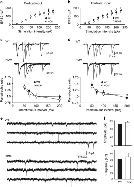 Basal synaptic transmission in the LA is normal in Rapgef6 knockout mice. (a) Synaptic input–output curves for the EPSCs recorded at the cortico-LA synapses in slices from WT and HOM mice. The EPSCs were recorded under voltage-clamp conditions at a holding potential of −70 mV. (b) Same as in a, but the EPSCs were recorded in thalamic input to the LA. (c) Top, examples of paired-pulse facilitation of the cortico–amygdala EPSCs recorded at different interstimulus intervals (50 ms, 70 ms, 100 ms and 200 ms) at a holding potential of −70 mV in slices from WT and HOM mice. Superimposed traces are averages of 10 EPSCs at each interstimulus interval. Bottom, summary plot of paired-pulse facilitation experiments in cortico-LA projections. (d) The experiments were identical to c but the EPSCs were recorded in thalamic input to the LA. (e) Rapgef6 ablation had no effect on the parameters of glutamatergic mEPSCs. mEPScs were recorded in LA neurons at −70 mV in slices from WT (upper) and HOM mice (lower) in the presence of 1 μM TTX. (f) Summary plot showing mean peak amplitude (upper) and frequency (lower) of mEPSCs recorded in LA neurons in slices from WT and HOM mice. Results are shown as mean±s.e.m. EPSC, excitatory postsynaptic current; HET, heterozygous; HOM, homozygous; LA, lateral nucleus of the amygdala; TTX, tetrodotoxin; WT, wild type.