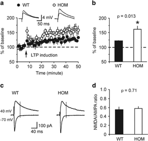 Spike timing-dependent LTP in cortical input to the LA is enhanced in Rapgef6 knockout mice. (a) Spike timing-dependent LTP at the cortico-LA synapses in slices from WT and HOM mice. Insets show the average of 15 EPSPs recorded in current-clamp mode before and 40 min after induction. (b) Summary of LTP experiments in cortical input to the LA. (c) Evoked cortico-LA EPSCs (average of 15 traces) were recorded sequentially in same neurons at holding potentials −70 mV (bottom) and +40 mV (top) in slices from WT and HOM mice. The NMDA receptor-mediated component of the EPSC was measured at +40 mV at the dashed lines. (d) Summary of the NMDA/AMPA ratio values in slices from WT and HOM mice. Results are shown as mean±s.e.m. EPSP, excitatory postsynaptic potential; HOM, homozygous; LA, lateral nucleus of the amygdala; LTP, long-term potentiation; WT, wild type.