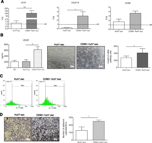 HUVECs characterization after exosomes treatment: a RT-PCR analyses for VEGF, VEGF-R and ICAM1 were done on HUVECs 18 h after treatment with CD90+ or Huh7-derived exosomes (5 μg/ml). ΔΔct expressed as fold of induction (FOI) compared with control (untreated cells). ***p < 0.001; *p < 0.05. b Left panel: ELISA for VEGF released by HUVECs 18 h after treatment with CD90 + exo or Huh7exo. Untreated cells were used as control. *p < 0.05. Middle-right panels: Tubulogenesis analysis. Phase contrast micrographs (20×) and quantification of matrigel assay expressed as length of cable as arbitrary unit. c FACS analysis for ICAM-1 on HUVECs 18 h after treatment with Huh7exo or CD90 + exo, respectively. d Adhesion capacity. Left panel: Phase contrast micrographs (20×) showing the adhesion of CD90 + cells on HUVEC monolayer pre-treated with Huh7exo or CD90 + exo. Right panel: Quantification of adhesion established by counting the number of adherent CD90 + cells (violet) per field; *p < 0.05