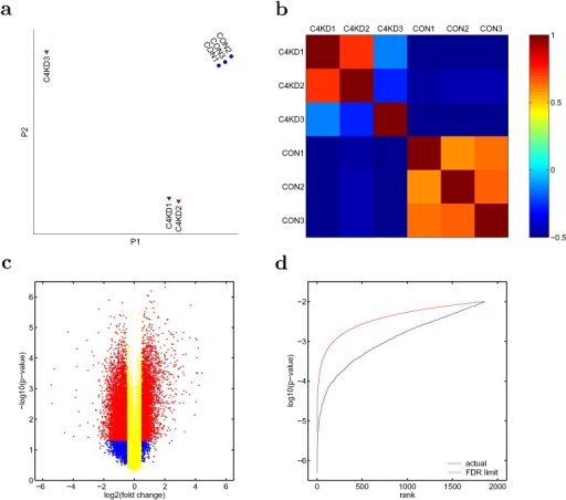 Quality control for data analysis. The array expression data (from all 41,345 probes) of each sample are projected to the first two components of PCA, P1 and P2 in a, showing the separation of 6 samples into three groups. This separation is also shown in the 6 × 6 matrix of the correlation coefficients between samples (b). The plot in (c) shows the selection criteria for significant fold change in individual gene expression: the absolute fold change has to be bigger than 20.5 (red and blue dots), and the p-value has to be smaller than 0.05. For functional analysis, the selected genes are ranked by p-value and are further selected by Benjamini-Hocheberg method to limit FDR (d).