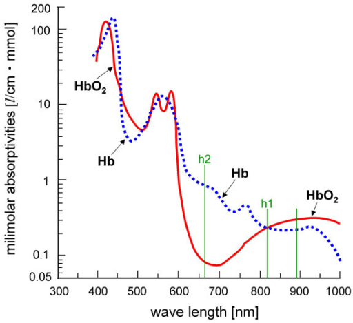 Physiological features of oxyhemoglobin (HbO2) and deoxyhemoglobin (Hb) represented by a thick red line and a dotted blue line, respectively, in light absorption. h1 and h2 represent the degree of light absorption of HbO2 and Hb at the wavelengths of 805 and 660 nm, respectively, in the near-infrared region.