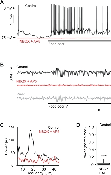 Ionotropic glutamate receptors are essential for odor responses of mitral cells.(A) Whole-cell recording from a mitral cell during odor stimulation (food extract; bar) before (black) and during (red) application of NBQX and AP5. (B) Local field potential recording during odor stimulation (food extract; bar) before (black) and during (red) application of NBQX and AP5 and after washout (gray). Traces are band-pass filtered between 8–43 Hz. (C) Power spectrum of local field potential traces (average of 6 trials; from unfiltered data) for the examples shown in (B). (D) Average local field potential power (15–30 Hz) in the presence of NBQX and AP5, normalized to control (n = 4 olfactory bulbs). ***, P<0.001.