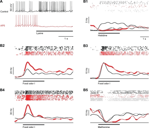 Effect of the NMDA receptor antagonist, AP5, on odor responses of mitral cells.(A) Whole-cell recording of a mitral cell response to odor stimulation (Lys, 10 µM; bar) before (black) and during (red) application of AP5. (B1–B5) Five examples illustrating effects of AP5 on odor responses. Conventions as in Fig. 3. Responses are from different cells and were recorded in the whole-cell, cell-attached or loose-patch configuration.