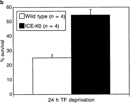 Survival in vitro of NGF-dependent DRG neurons isolated  from (a) mutant ICEC285G transgenic and (b) ICE knockout newborn mice  are protected from trophic factor withdrawal–mediated apoptosis. Survival represents the percentage of neurons remaining alive after 24 h of  serum deprivation (100% at day 0). (a) The results are the average three  double blindly scored independent experiments using newborn mice  from lines 7512 and 7539. Neurons from each mouse were plated separately, and at least 400 neurons were counted per well. Results are expressed as means ± SEM. (b) Results are from an experiment double  blindly scored performed in quadruplicate, from DRG neurons isolated  from four wild-type and four ICE knockout newborn mice. At least 500  neurons were counted per well. Results are expressed as means ± SD.