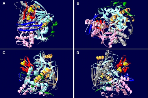 Three-dimensional ribbon structure of APS reductase from A. fulgidus.The beta-subunit segments are colored red (ferredoxin segment), blue (3 antiparallel beta-sheets segment), and green (tail segment); the alpha-subunit domains are colored light blue and orange (FAD-binding domain I and II), pink (capping domain), and grey (helical domain). The [4Fe-4S] clusters, FAD and substrate APS are shown as ball-and-stick representations; tryptophan Trp-B48 of AprB is highlighted by violet color. Ribbon structure is shown from (A) top view, (B) bottom view (substrate channel), (C) front view, and (D) back view.