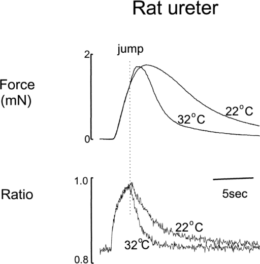 The effects of rapid temperature change. A jump from 22 to 32°C on the parameters of the phasic contraction of the rat ureter. The jump was applied during the rising phase of the force development, at a time when [Ca2+]i had almost reached its maximal value.