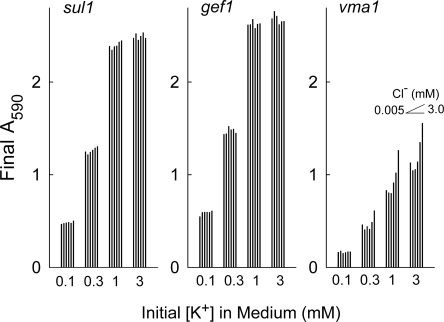 Effect of low K+ and Cl− concentrations on growth of sul1, gef1, and vma1 strains of S. cerevisiae. Cells from each strain were suspended at initial A590 of 0.1 and incubated aerobically at 30°C with rotary shaking for 24 h. The medium was derived from LCAPG, with increasing amounts of Cl− added as arginine Cl−. The initial concentrations of Cl− in the media were ∼0.005, 0.035, 0.10, 0.30, 1.0, and 3.0 mM (left to right) in each group of six bars. The initial concentrations of K+ (added as KH2PO4) were 0.1, 0.3, 1.0, and 3.0 mM.