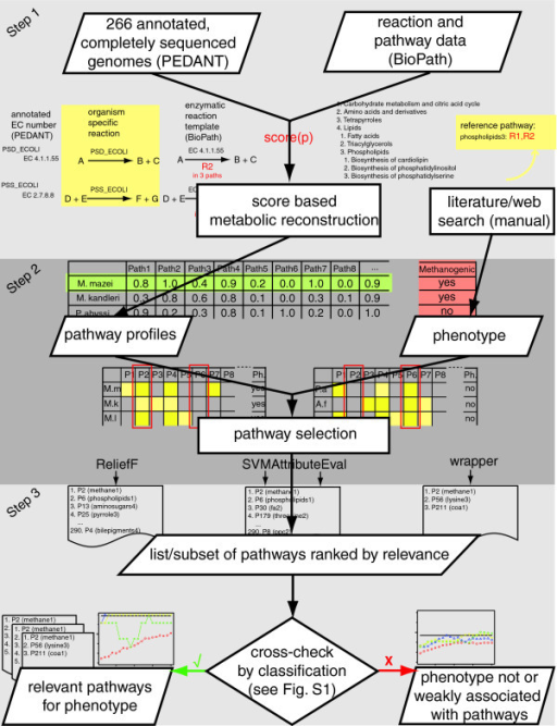 Overview of the approach. The three major steps of our approach are: metabolic reconstruction of completely sequenced genomes resulting in pathway profiles; pathway selection resulting in lists of pathways ranked by relevance; and cross-checking of the resulting pathway rankings by classification in order to estimate their significance (Figure S1 in Additional data file 2).
