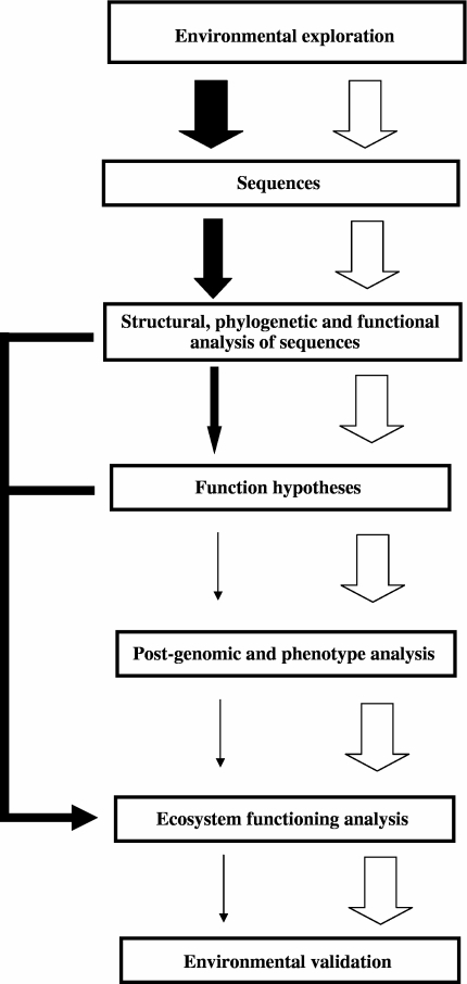 Real-life and ideal fluxes of analysis and information in environmental genomics. Current throughputs of analysis and information-processing are given as black arrows, whereas the ideal throughputs to be achieved are shown as white arrows. Arrow thickness reflects the efficiency of the analyses.