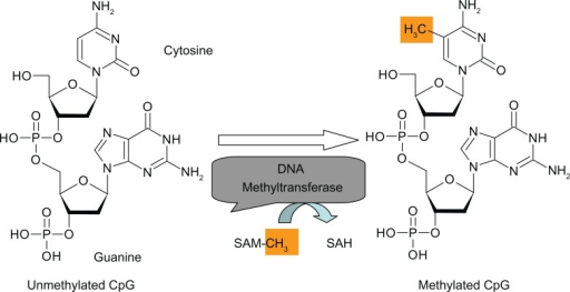 Nonenzymatic methylation of DNA by Sadenosylmethionine in