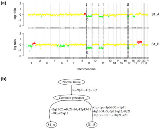 Principle of tumor progression tree reconstruction. (a) CGH log ratio profiles of two bladder tumors from the same patient, with color code as follows: homozygous deletions in blue, losses in green, normal regions in yellow, and gains in red. Chromosomes are delineated by gray vertical lines and a schematic representation of chromosomes and centromeres is drawn below each profile. Chromosome breakpoints common to both samples are indicated by dashed lines, with an arrow representing the sign of each breakpoint. For greater clarity, the common breakpoints on either side of the one-BAC homozygous deletion at 9p21 are not drawn. This common aberration is instead circled in each profile. (b) Tumor progression tree reconstructed for the two samples. Common breakpoints define early aberrations occurring in the common precursor of the two samples. Chromosome aberrations specific to each tumor are placed on subsequent edges.