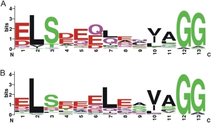 Sequence logos of double-glycine motif generated from cyanobacterial precursors in NHLP and N11P families.There is a conserved region found near the peptide cleavage site with Gly-Gly motif from the precursor peptides. Relative frequency of acidic residues of the conserved sequences from families (A) NHLP and (B) N11P are demonstrated. This figure was generated by web-based software [39].