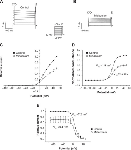 Pharmacological properties of Kv1.5 current inhibition.Notes: Typical families of Kv1.5 current traces elicited by a double-step voltage protocol (inset in [A]) before (A) and after (B) incubation with 100 μM midazolam in Xenopus oocytes. (C) Current–voltage relationship of Kv1.5 current under control conditions (filled boxes) and after incubation with midazolam (open circles) measured at peak current (n=6). (D) Kv1.5 activation curves established by dividing peak current amplitude by the electrochemical driving force. Midazolam did not significantly influence the half-maximal activation voltage (V1/2) (n=6). (E) Kv1.5 channel inactivation curves established by plotting tail current amplitude versus the potential of the first voltage step. Midazolam resulted in a small but significant shift of the inactivation curve (n=6).