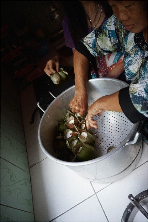 Modern preparation of glutinous rice snack prepared inNepenthes ampullariapitchers. Pitchers placed in steamer by indigenous Bidayuh family of Bau, Malaysia.