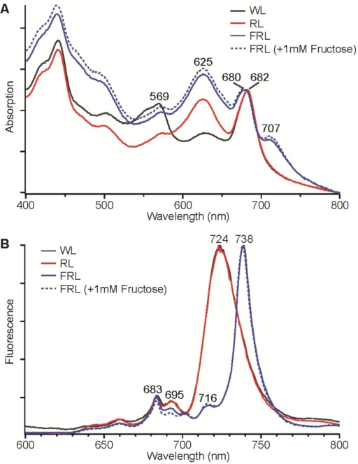 Absorption spectra (A) and low-temperature (77 K) fluorescence emission spectra (B) for Synechococcus sp. PCC 7335 cells grown in white light (WL, solid black line), red light (RL, solid red line), far-red light (FRL, solid blue line), and FRL with 1 mM fructose added to the growth medium (dotted blue line). The excitation wavelength was 440 nm for the fluorescence emission spectra in panel B.