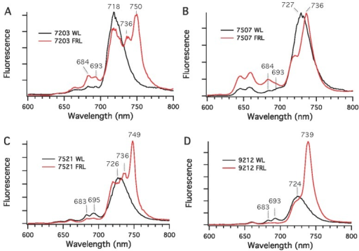 Low-temperature (77 K) fluorescence emission spectra for four cyanobacterial strains grown in white light (WL) or far-red light (FRL). (A) Chr. thermalis PCC 7203; (B) Calothrix sp. PCC 7507; (C) F. thermalis PCC 7521; (D) Chlorogloeopsis sp. PCC 9212. The excitation wavelength was 440 nm, which predominantly excites Chls.