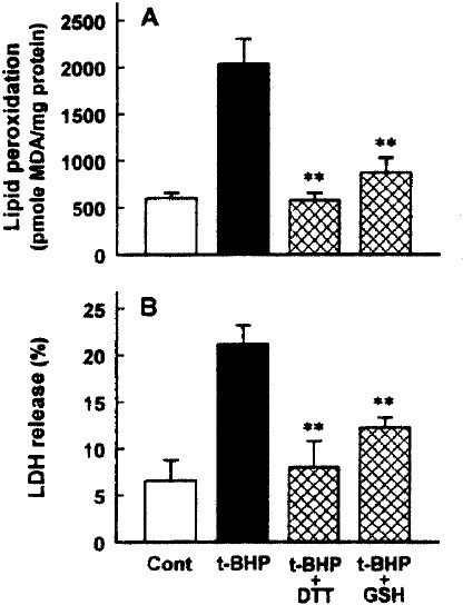 Effect of DTT and GSH on t-BHP-induced lipid peroxidation (A) and LDH release (B). Liver slices were treated with 1 mM t-BHP for 60 min at 37°C in the presence or absence of 2 mM DTT or GSH. Data are mean ± SE of four experiments. **p<0.01 compared with t-HP alone.