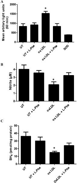 Effects of L-phenylalanine (L-phe) challenge on superoxide anion, nitrite and 6R-L-erythro-5,6,7,8-tetrahydrobiopterin (BH4) levels in cultured endothelial (sEnd1) cells in the presence and absence of human modified oxidized lipoprotein. (A) Cellular superoxide anion concentration as quantified by mean arbitrary lights units (lucigenin chemiluminescence) using superoxide dismutase as positive control, (B) nitrite accumulation in media, (C) cellular BH4 concentration, in sEnd 1 cells untreated (UT) or treated with Human modified oxidized lipoprotein (100 μM, 2 h) in the absence or presence of L-phe (500 μM, 0.5 h); n = 4–9, mean ± SEM. *P < 0.05, significantly different from untreated control).