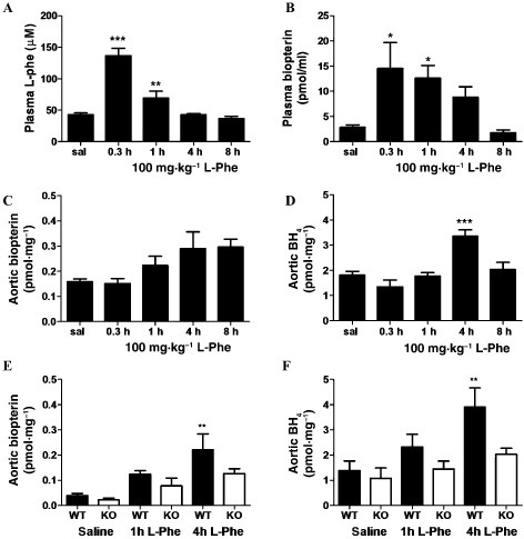 Effects of oral L-phe challenge on systemic and vascular biopterin levels in wild-type mice and GCH1(fl/fl)-Tie2Cre (KO) mice. (A) Plasma L-phenylalanine, (B) plasma total biopterins, (C) aortic total biopterins and (D) aortic 6R-L-erythro-5,6,7,8-tetrahydrobiopterin (BH4) levels detected by HPLC, over an 8 h time course, following 100 mg·kg−1 oral L-phe challenge in wild-type mice. n = 6–12 for plasma and n = 4–8 aorta, mean ± SEM. ***P < 0.001, **P < 0.01, *P < 0.05: significantly different from saline control. (E) Aortic total biopterins and (F) aortic BH4 levels in GCH1(fl/fl)-Tie2Cre (KO) mice and wild-type littermates, 1 and 4 h after 100 mg·kg−1 oral L-phe challenge. n = 6–8, mean ± SEM. **P < 0.01, significantly different from WT saline.