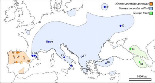 Map showing the distribution of Neomys anomalus anomalus, N. a. milleri and N. teres. The original distributions were downloaded from the IUCN Red List of Threatened Species website [72, 73] and they were modified to reflect the results of our genetic analyses. Dots indicate samples used for sequencing nuclear introns and cytochrome b (large dots) or only cytochrome b (small dots). The locations of additional cytochrome b sequences downloaded from databases are indicated with diamonds (with empty diamonds corresponding to samples being used in the cytochrome b tree but not in the species tree analyses). All localities correspond to a single specimen, except the localities of N. teres. Locality numbers are given in Tables S1 (for samples obtained for this work) and S2 (for database sequences) of Additional file 1. Type localities of N. a. anomalus (San Martín de la Vega, Madrid, Spain) and N. a. milleri (Chesières, Alpes Vaudoises, Switzerland) are indicated with a star symbol. The distribution of N. fodiens largely overlaps with that of the other species and it is not shown here; see Additional file 1: Tables S1 and S2 for further details