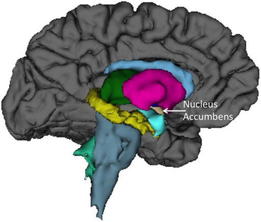 Left medial view of average brain surface volumes (gray), and subcortical structures including the Nucleus Accumbens (light brown).