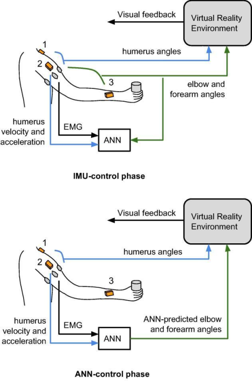 The two experimental phases of the study: the IMU-control and ANN-control phase. Shown are the EMG sensors around the circumference of the humerus (grey ovals), and three IMU (orange boxes, 1: thorax, 2: humerus, 3: forearm). Humeral angles are calculated by the combination of signals from the thorax and humerus IMU, and these are used to control the movement of the virtual humerus in the VRE. Similarly, elbow/forearm angles are calculated by the combination of signals from the humerus and forearm IMU, and these are used in the IMU-control phase to control the movement of the virtual forearm in the VRE. These are also used as output training signals for the ANN, while the input training signals are EMG and humerus angular velocity and linear acceleration, calculated from the humerus IMU. In the ANN-control phase, the ANN outputs are used to control the virtual forearm in the VRE instead of the IMU signals.