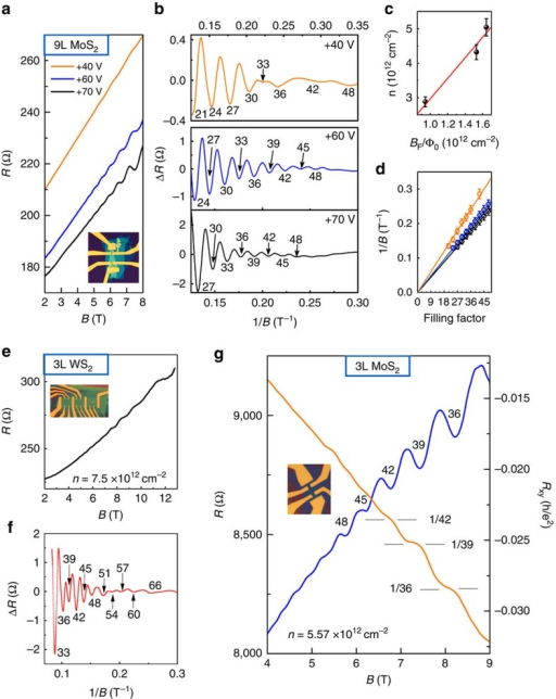 Quantum oscillations in odd-layer TMDCs.(a–d) Quantum oscillations in 9L MoS2. (a) Resistance R as a function of B field at + 40 V (orange line), +60 V (blue line) and +70 V (black line) gate voltages. The inset shows the sample image. (b) After subtracting the baselines of R ∼ B curves in a, ΔR curves plotted as a function of 1/B yields an oscillation period 1/BF, which decreases with increasing gate voltages. The filling factors are labelled for the oscillations valleys. The degeneracy of 6 arises from the degeneracy between the 3 Q and 3 Q' valleys; the spin degeneracy within each Q or Q' valley is already lifted by the broken inversion symmetry. At relatively high magnetic fields, an LL sextet can be lifted into two LL triplets caused by the valley Zeeman effect. (c) The total carrier density n obtained from the Hall measurements as a function of BF/Φ0 (black dots) for different gate voltages. The best fit (red line) indicates a LL degeneracy of ∼3.0±0.1. (d) LL filling factors as a function of 1/B at different gate voltages. The linear fit yields a zero berry phase. (e,f) Quantum oscillations in 3L WS2. (e) R plotted as a function of B at the carrier density of 7.5 × 1012 cm−2 (f) ΔR curves plotted as a function of 1/B. The LL degeneracy evolves from 6 at low-B fields to 3 at high-B fields. (g) The onset of QH states in 3L MoS2. Magnetoresistance resistance R (blue line) and Hall resistance Rxy (orange line) as a function of B field at 2 K. The QH states are shown by at least three almost quantized plateaus in Rxy at ν=36, 39 and 42.